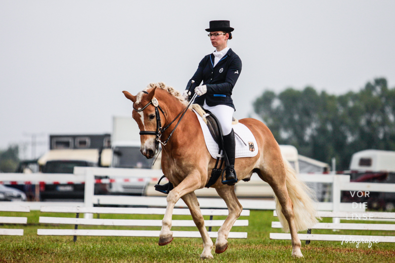 Internationale Haflinger Meisterschaft 2014
